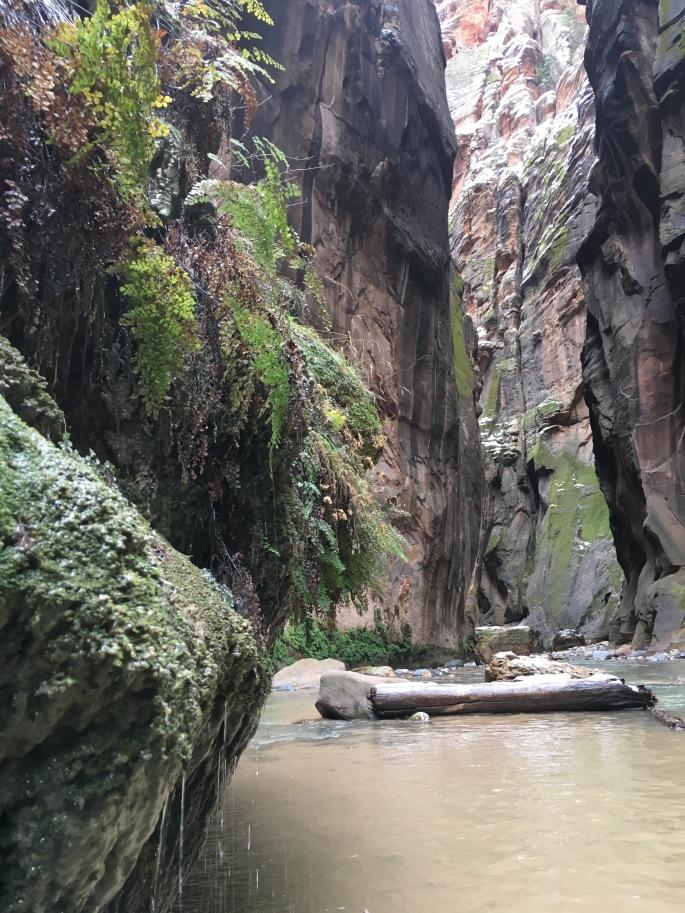 zionnationalparkimg_7860
