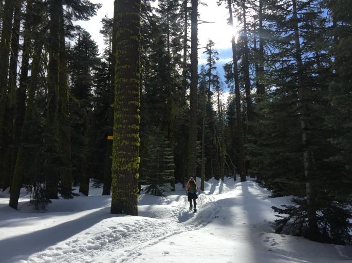 YosemiteDeweyPointIMG_3826