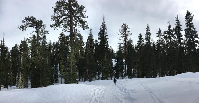 YosemiteDeweyPointIMG_3853