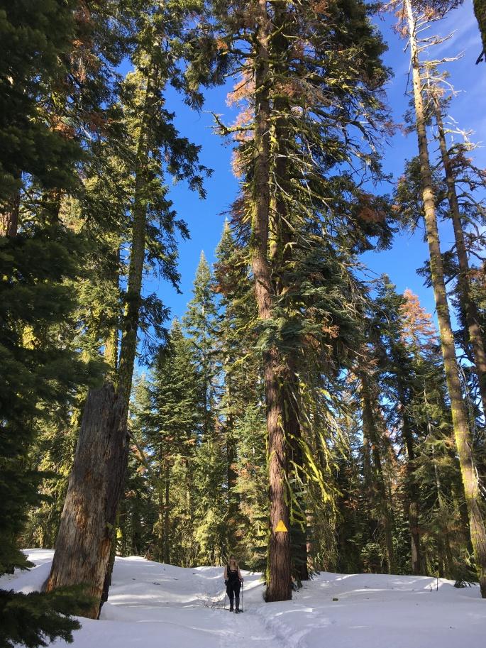 YosemiteDeweyPointIMG_3858